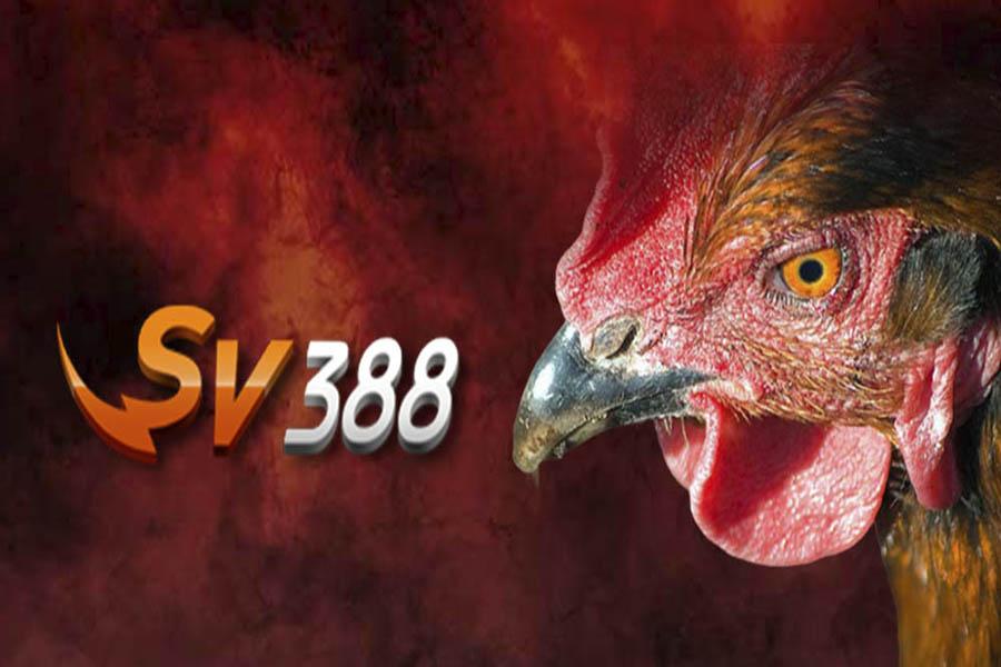 Nhà cái SV388 chất lượng và an toàn