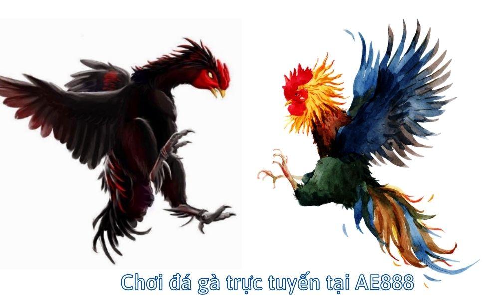 Chơi đá gà trực tuyến tại AE888